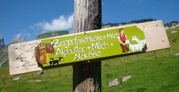 Swiss Goat Cheese For Sale