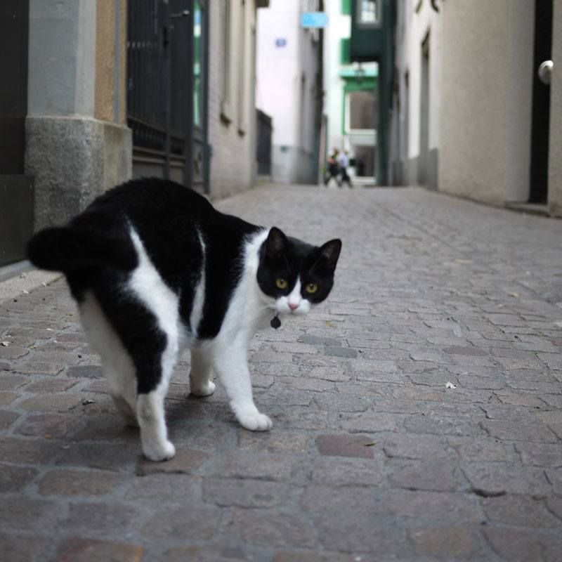 Alley Cat in Zurich