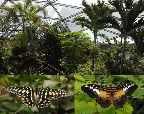 Papiliorama Kerzers Switzerland