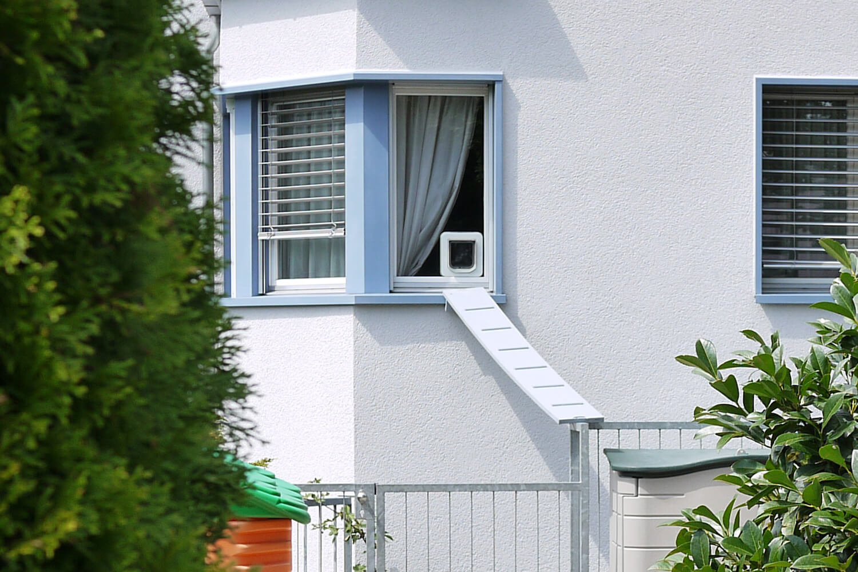 Scary cat ladders in Switzerland