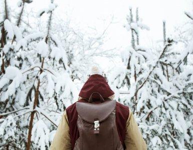 Switzerland Winter Forest