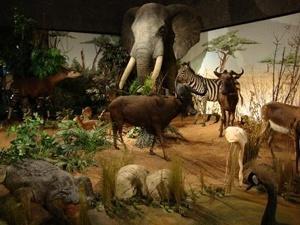 Natural History Museum Geneva