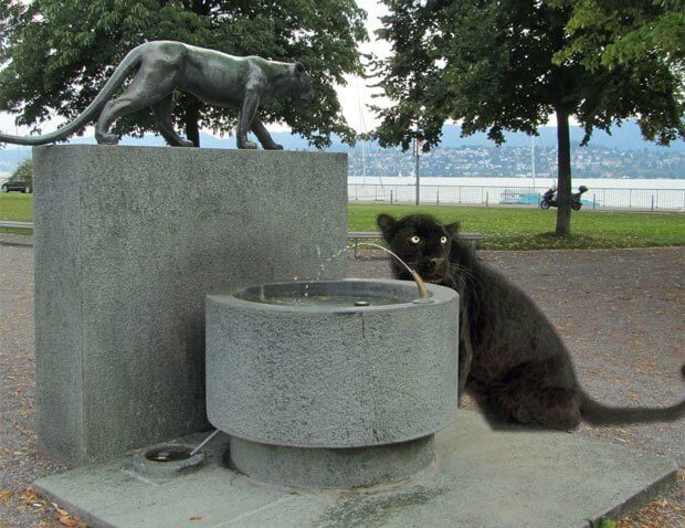 Swiss Black Panther at Zurich Fountain
