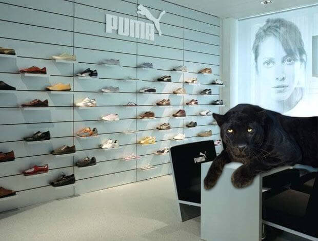 Swiss Black Panther at Zurich Puma Store