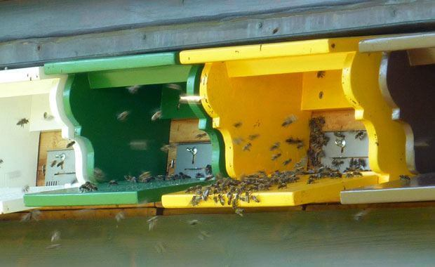 Honey in the Mailbox - Honey Bees in Switzerland