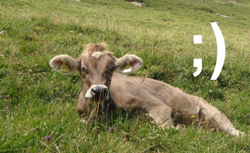 Texting Cows in Switzerland
