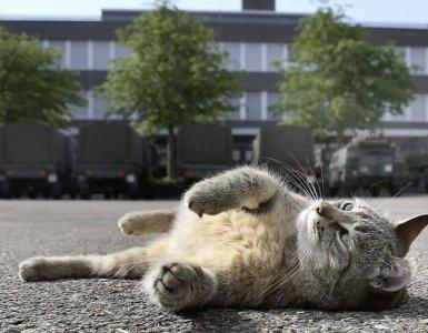 Swiss Army Cat
