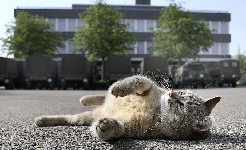 Brigadier Broccoli, the famous Swiss Army cat