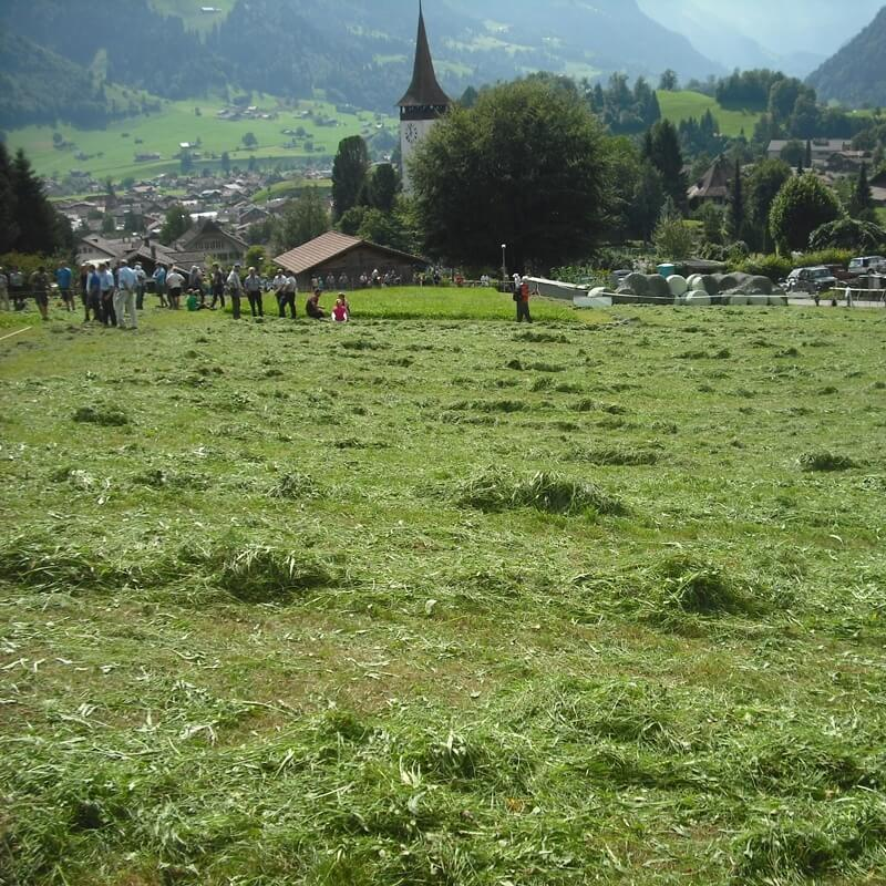 Frutigen Scything Competition - Switzerland