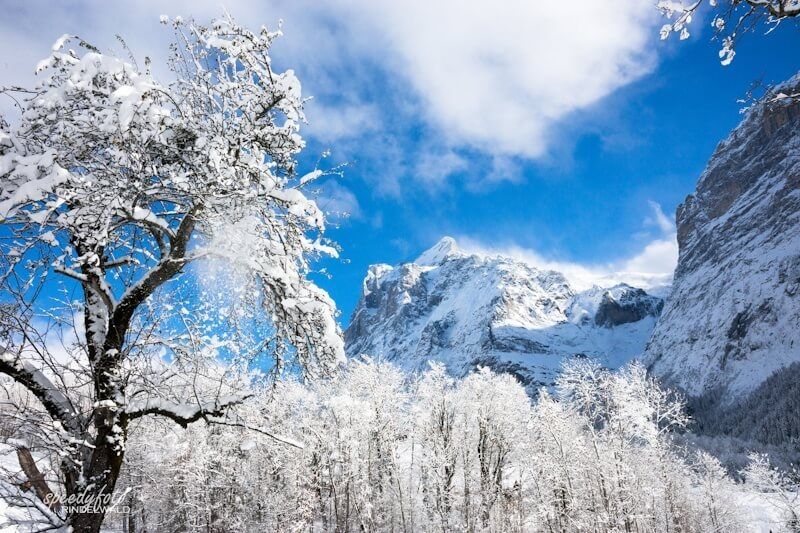 Speedyphoto - Winter Morning in Grindelwald