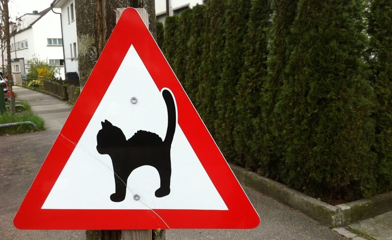 Cats in Switzerland - Swiss Cats