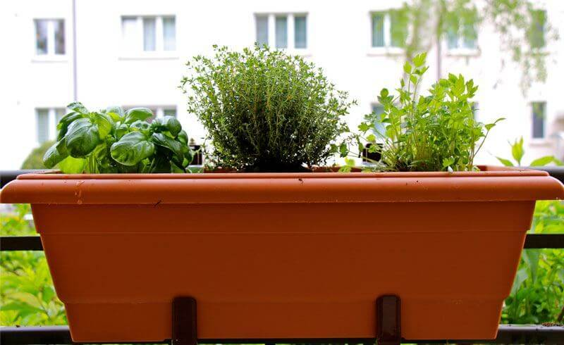 Flowers and Herbs Perfect for a Balcony Garden - Newly Swissed
