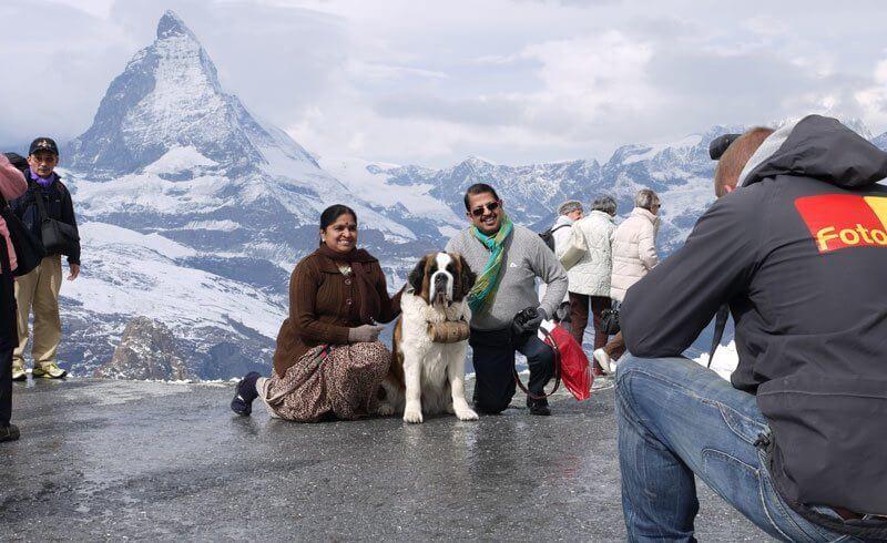 Swiss Valais - St. Bernard Dog Matterhorn