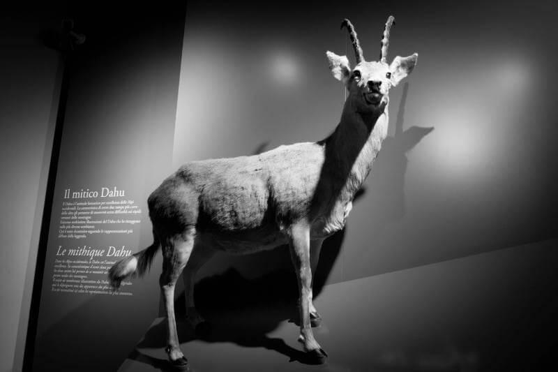 Dahu Animal at Museum