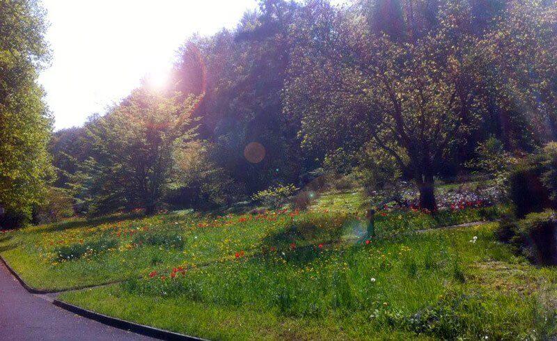 Zurich Cemetery - Friedhof Sihlfeld