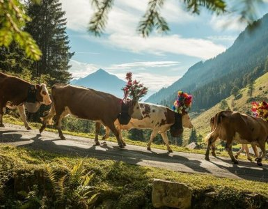 Alpine Descent Switzerland