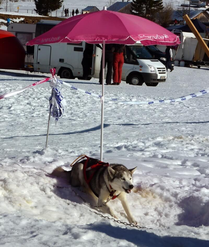 International Sled Dog Race