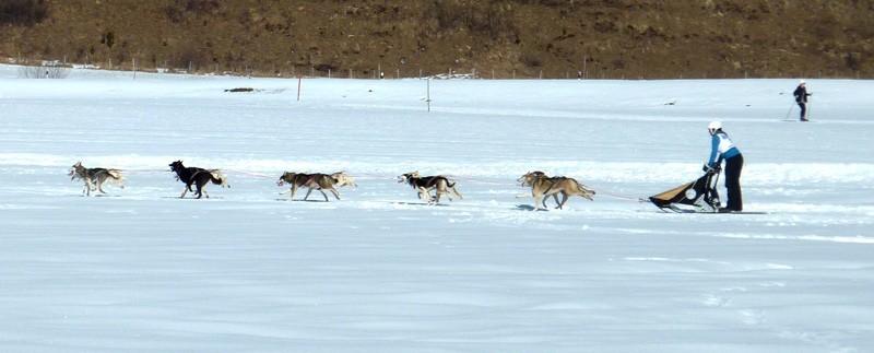 International Sled Dog Race