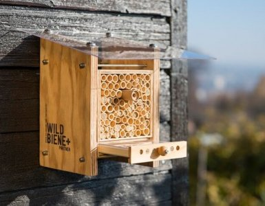 Wildbiene und Partner - Urban Bee Farming