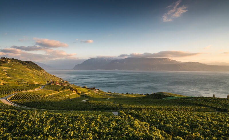 Lavaux Vineyards in the Evening