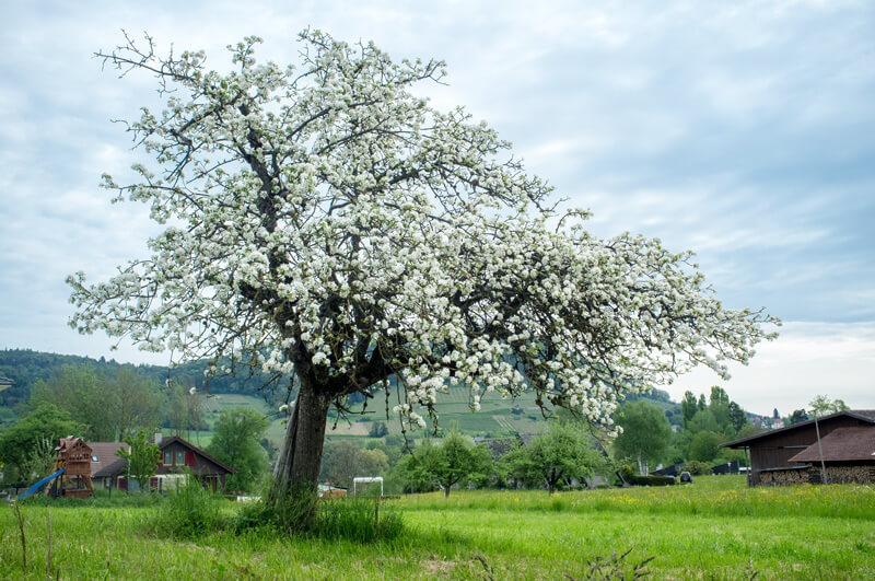 Thurgau in Spring