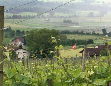 Wine Hike Weinfelden