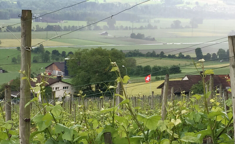 Wine Hike Weinfelden