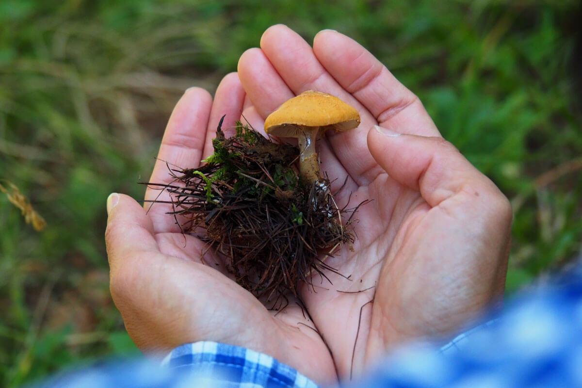 Saas-Fee - Mushroom Hunting at Waldhotel Fletschhorn
