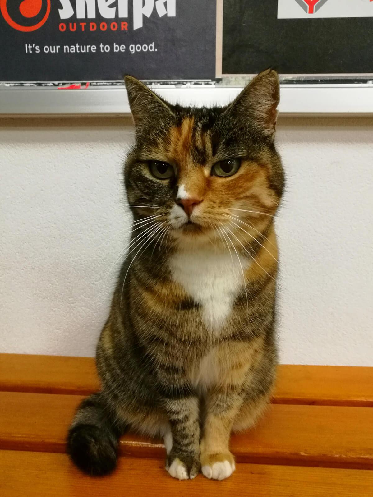 Swiss Outdoor Cat