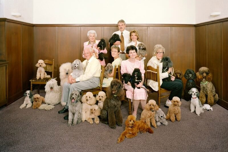 Swiss Hobby Clubs - Poodle Club (Copyright by Sprecher & Cortelli)