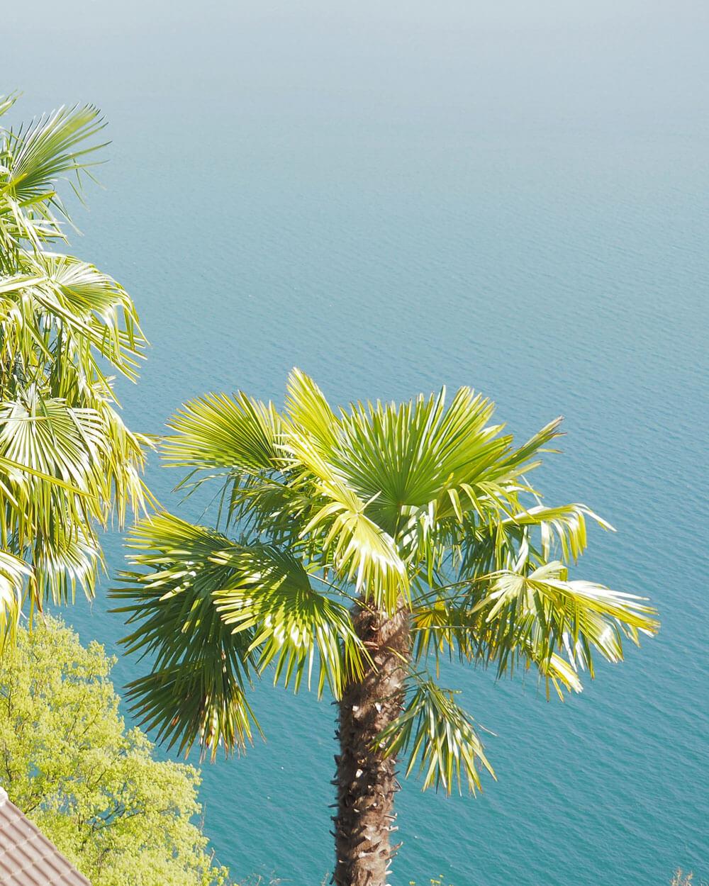Ticino Palm Trees