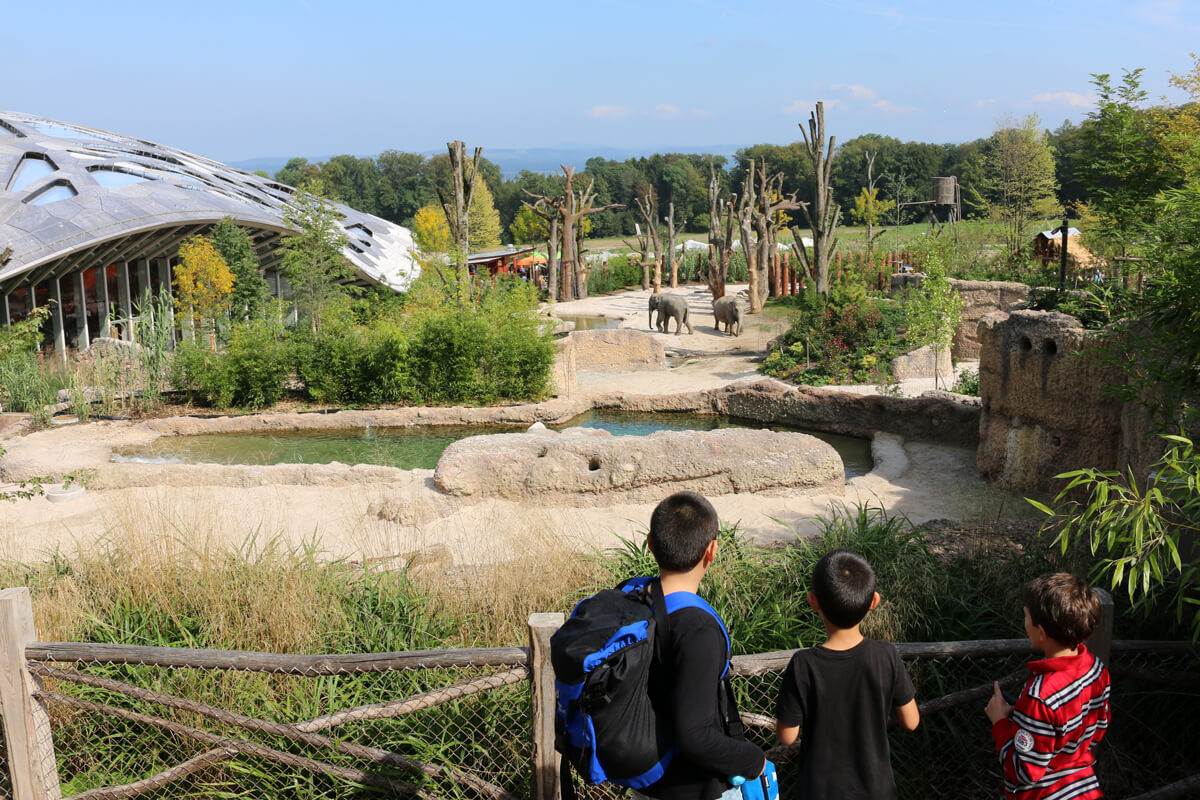 Zoo Zurich with Kids