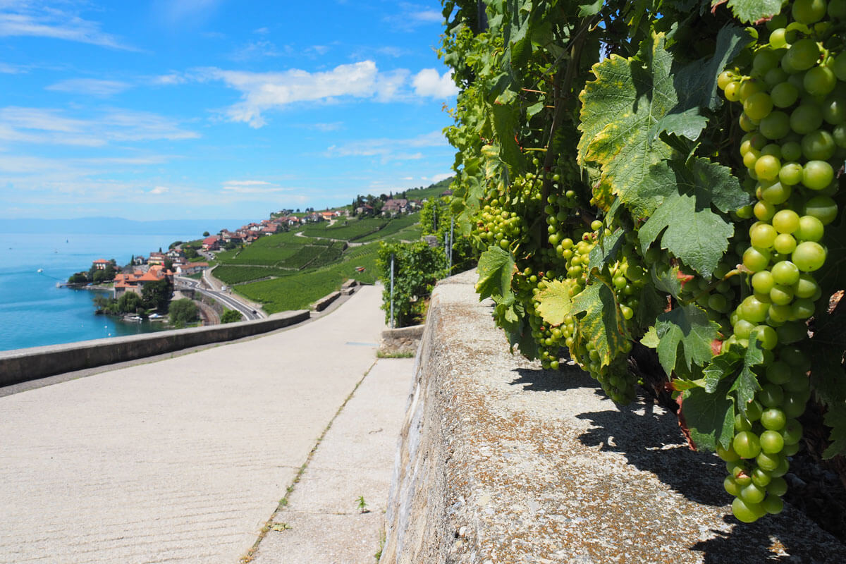 Saint-Saphorin in Lavaux, Switzerland