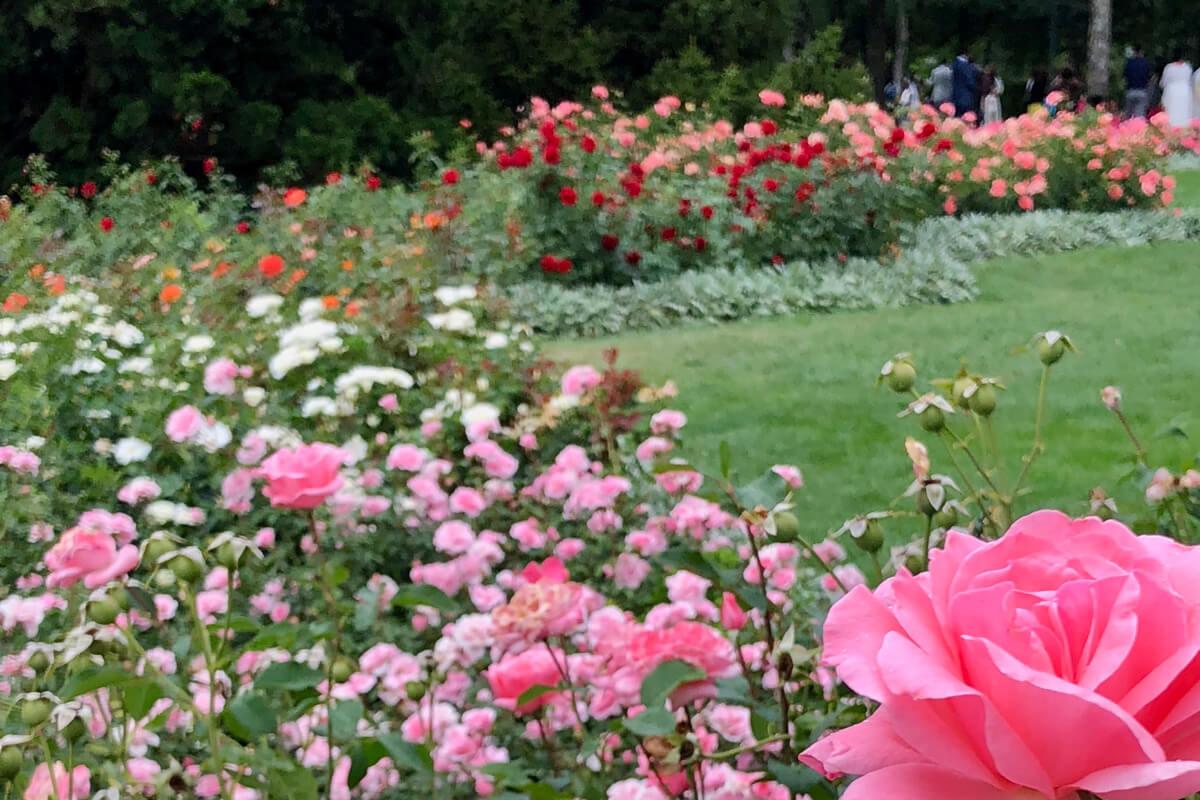 Bern, Switzerland Rose Garden
