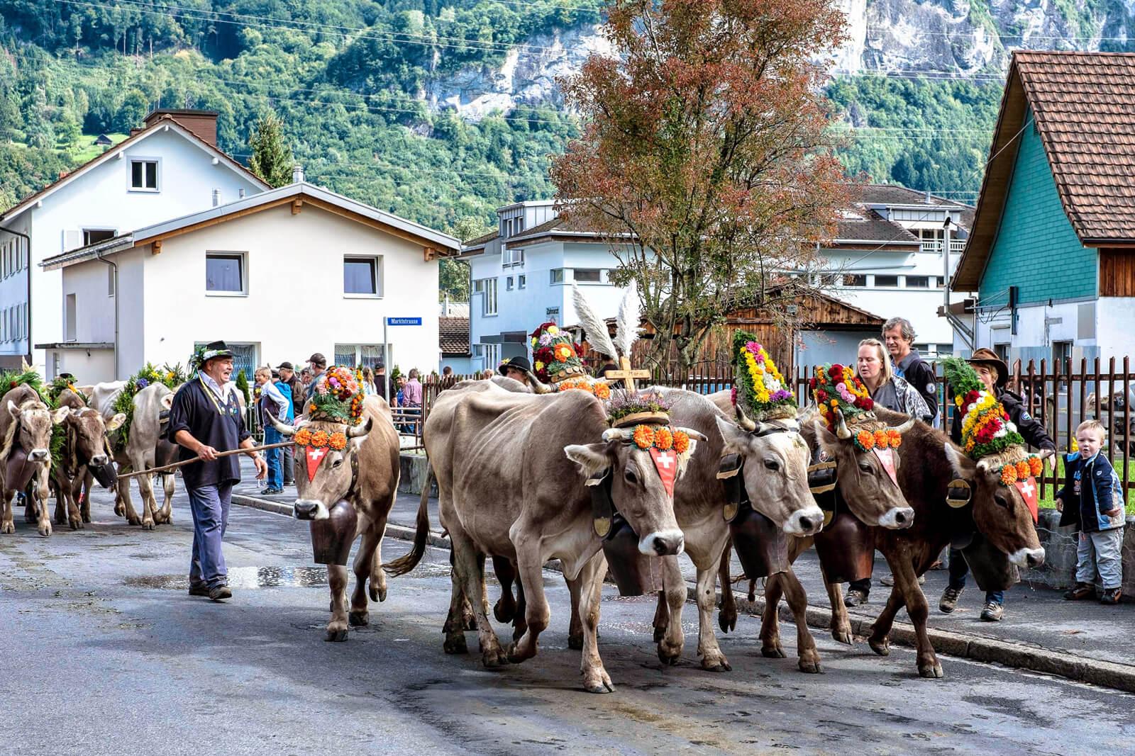 Alpabzug Alpine Cow Parade in Flims