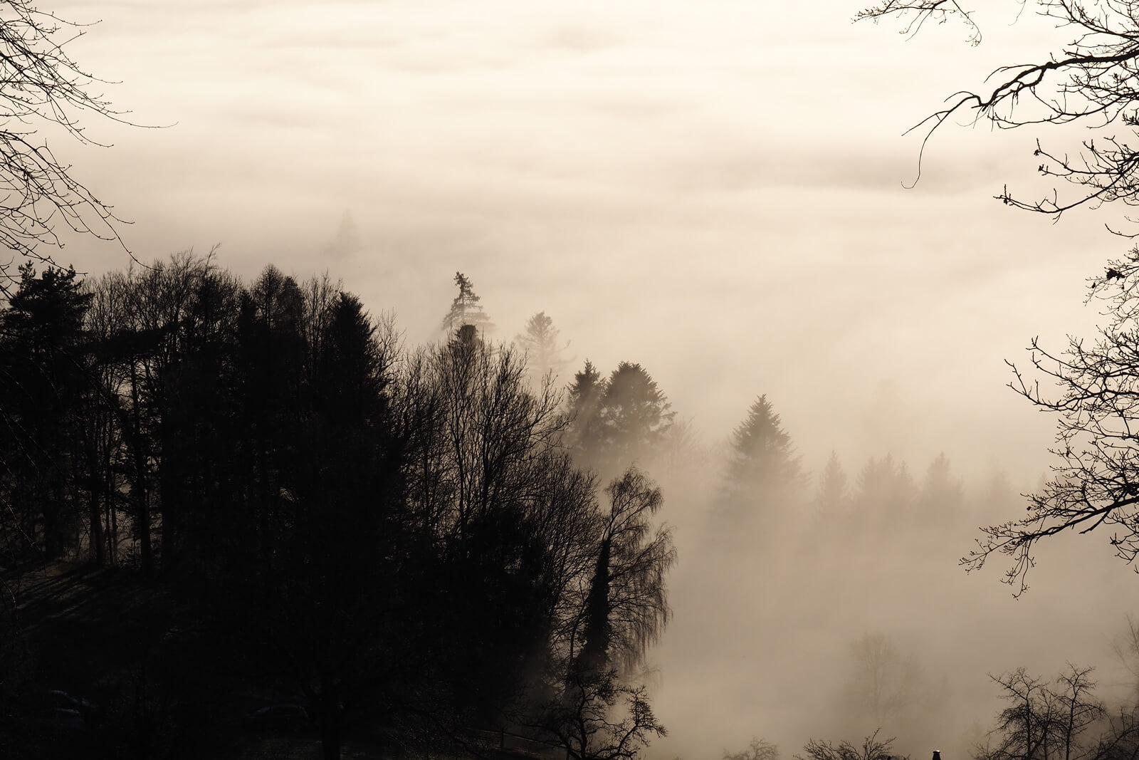 Nebelmeer at Bachtel - Sea of Fog aboove Switzerland