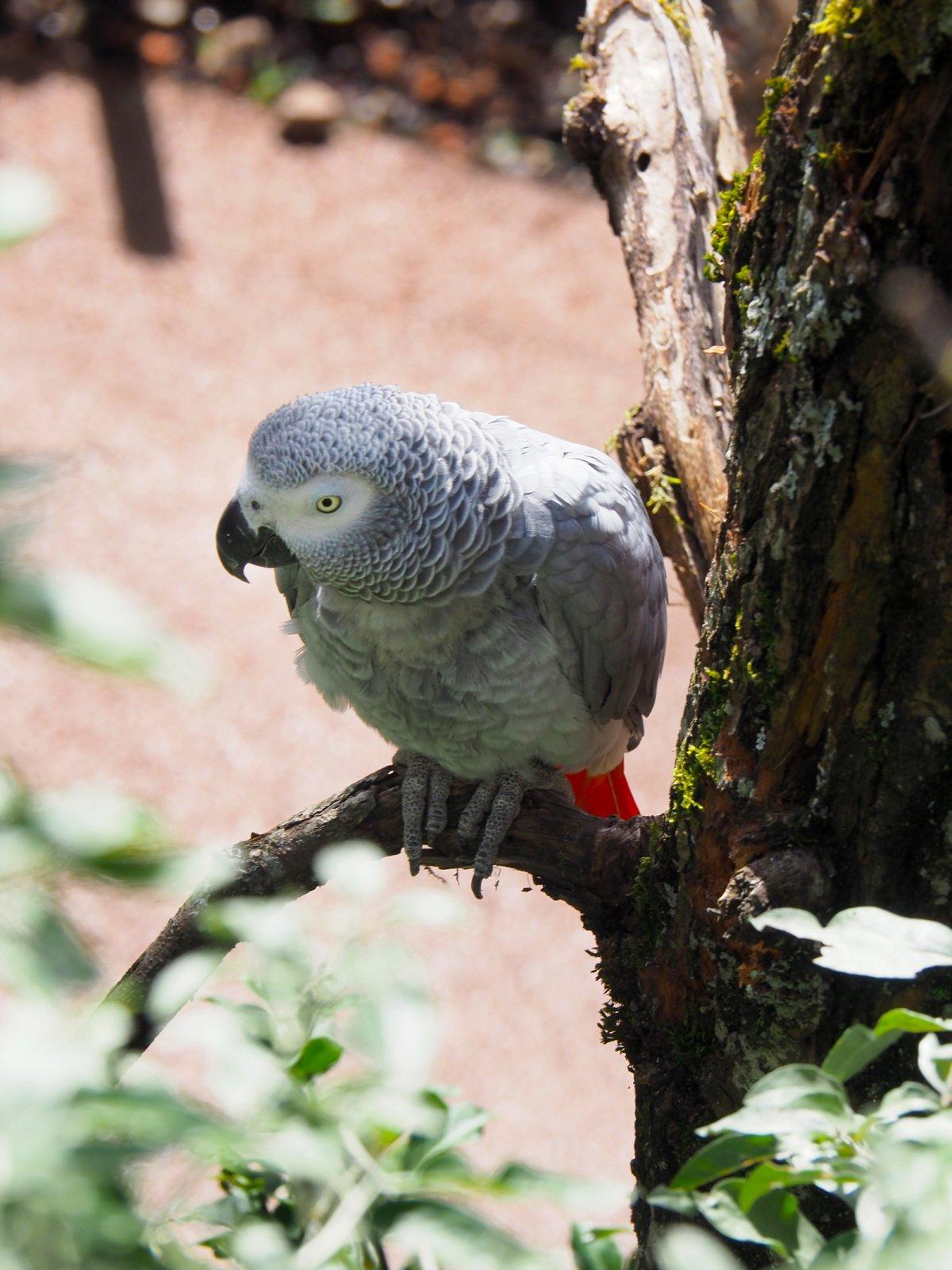 Lewa Savanne Zoo Zurich