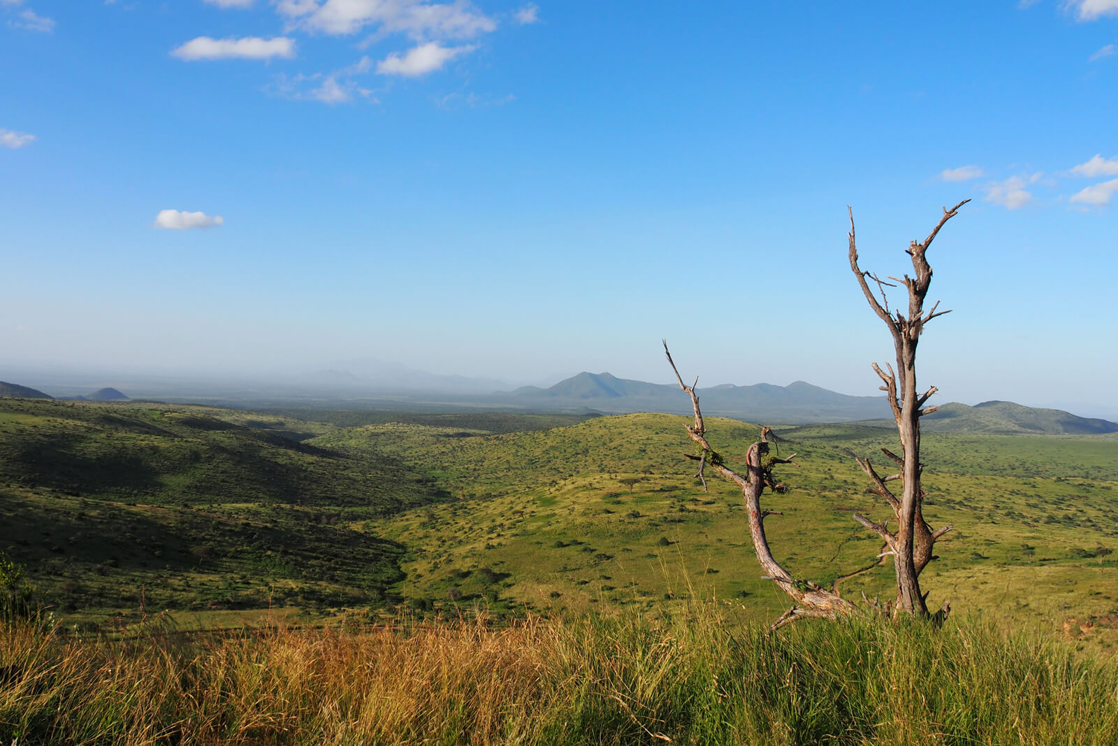 A view of the Lewa Wildlife Conservancy in Kenya