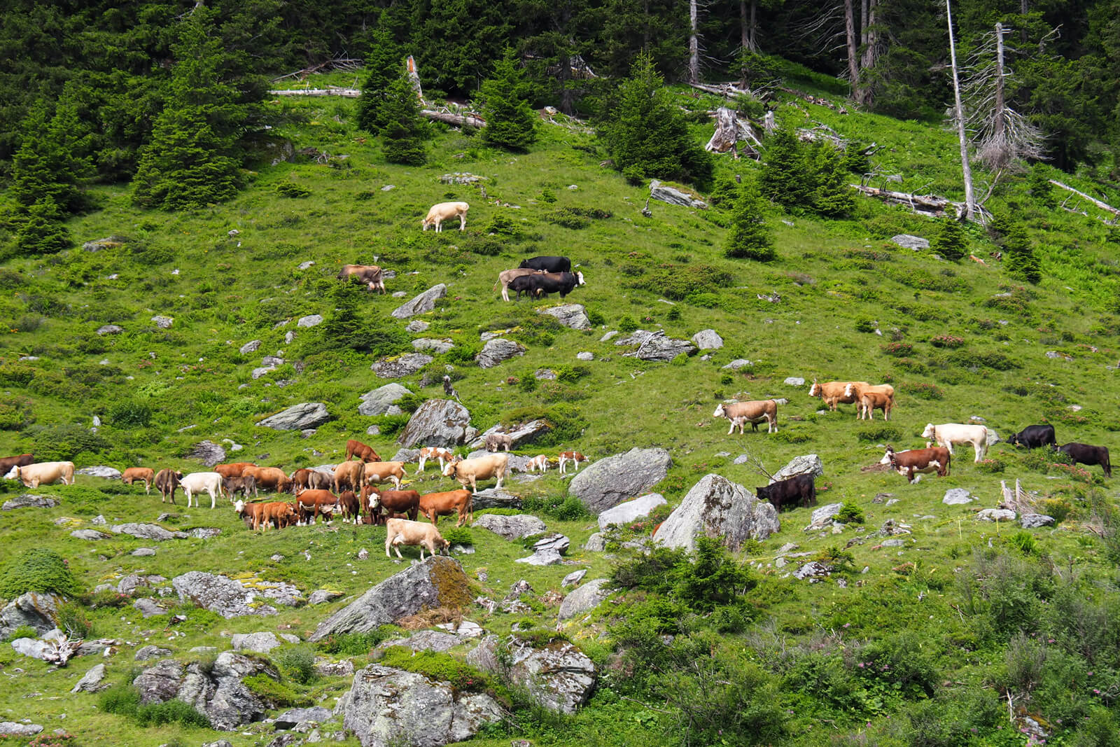 Hiking from Brigels to Val Frisal