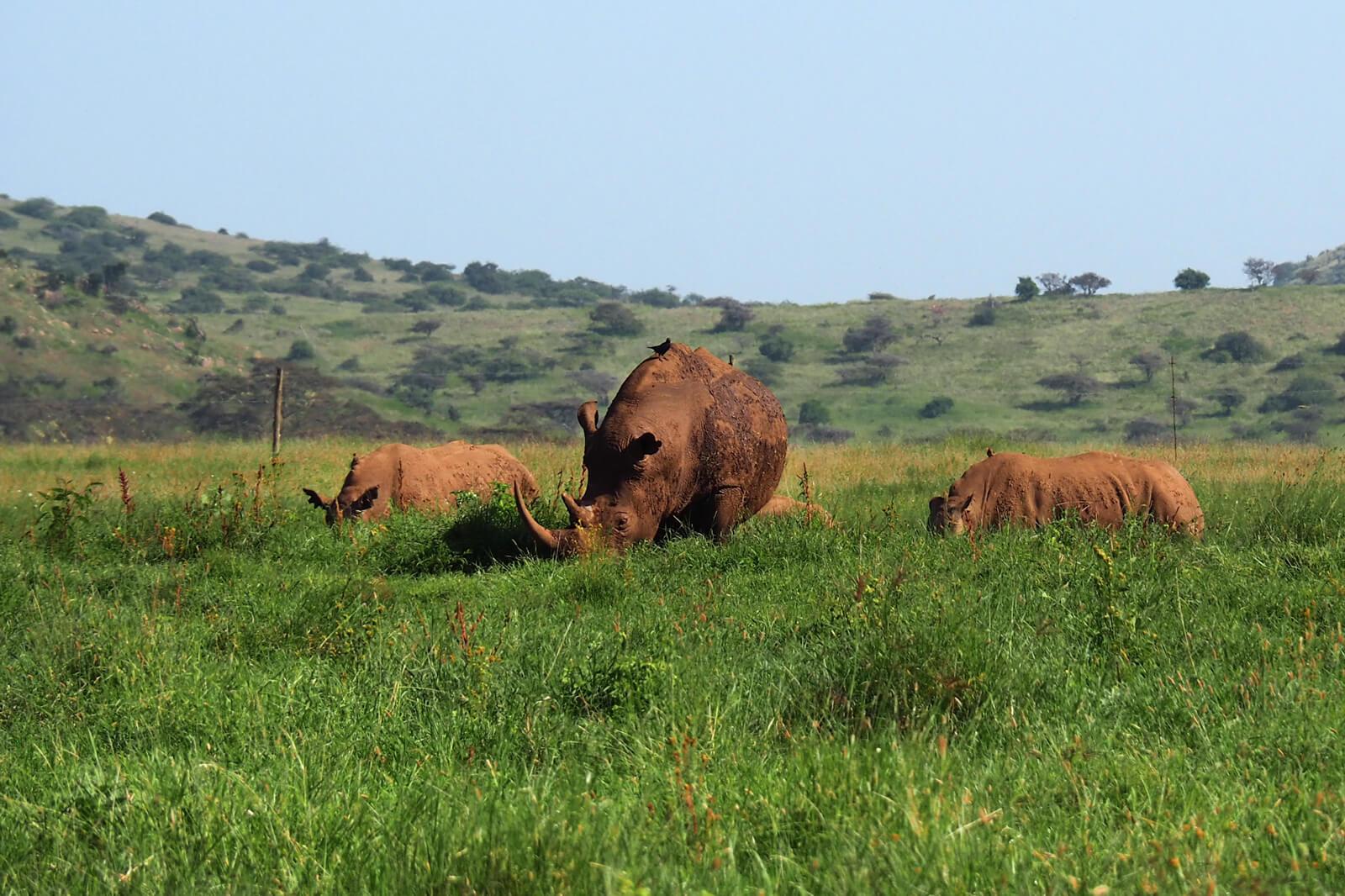 Lewa Wildlife Conservancy - Rhinos