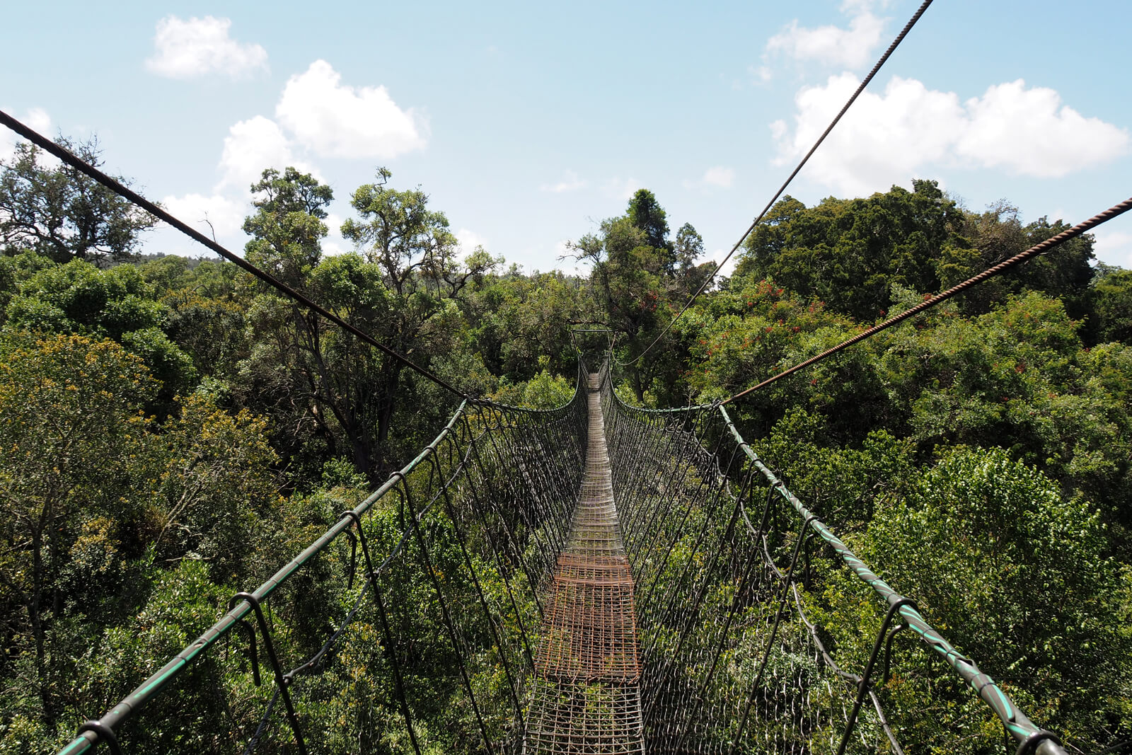 Ngare Ndare Forest Trust Canopy Walk