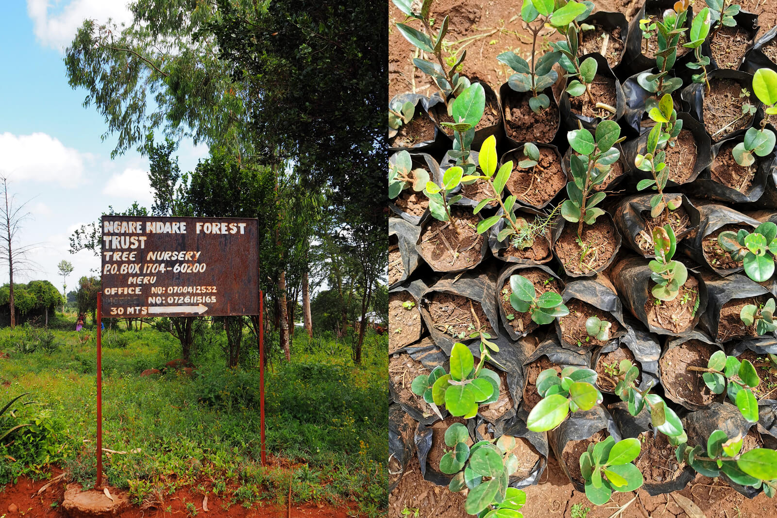 Ngare Ndare Forest Trust Nursery