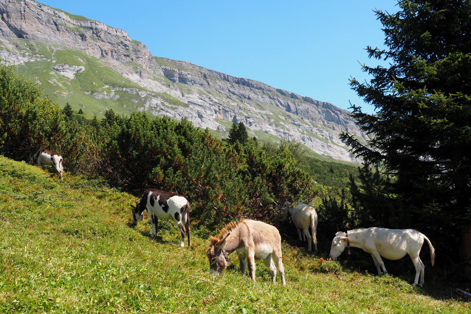 Flims Water Trail Hike