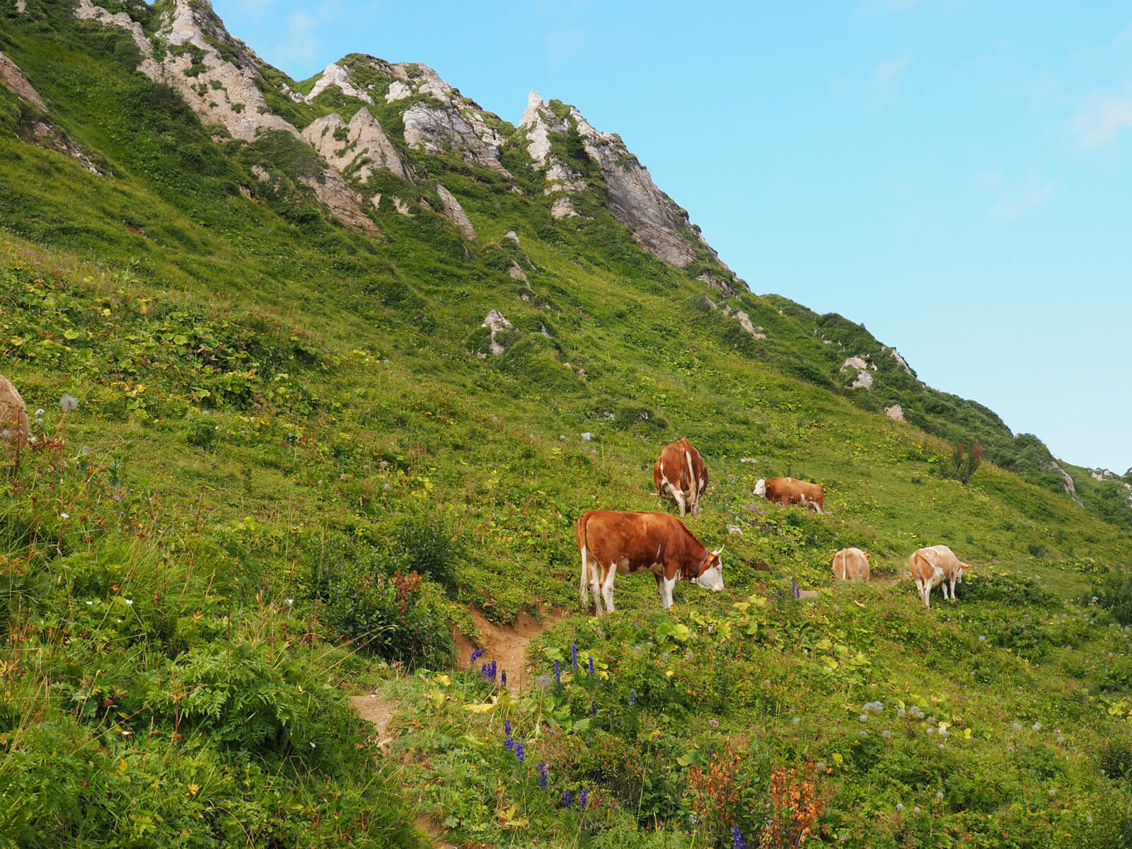 This image has an empty alt attribute; its file name is Alpine-Meadow-with-Cows-above-Lenk-01.jpg