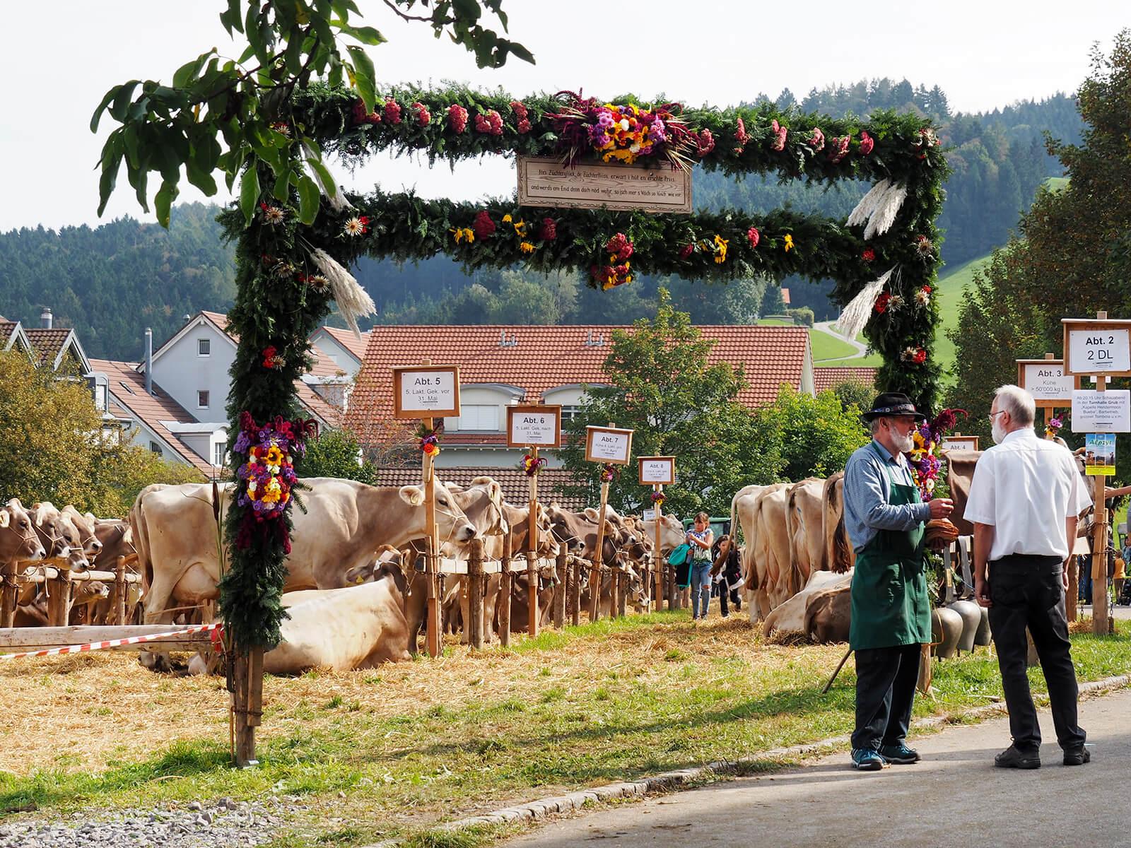 Cattle Show in Heiden, Appenzell Ausserrhoden