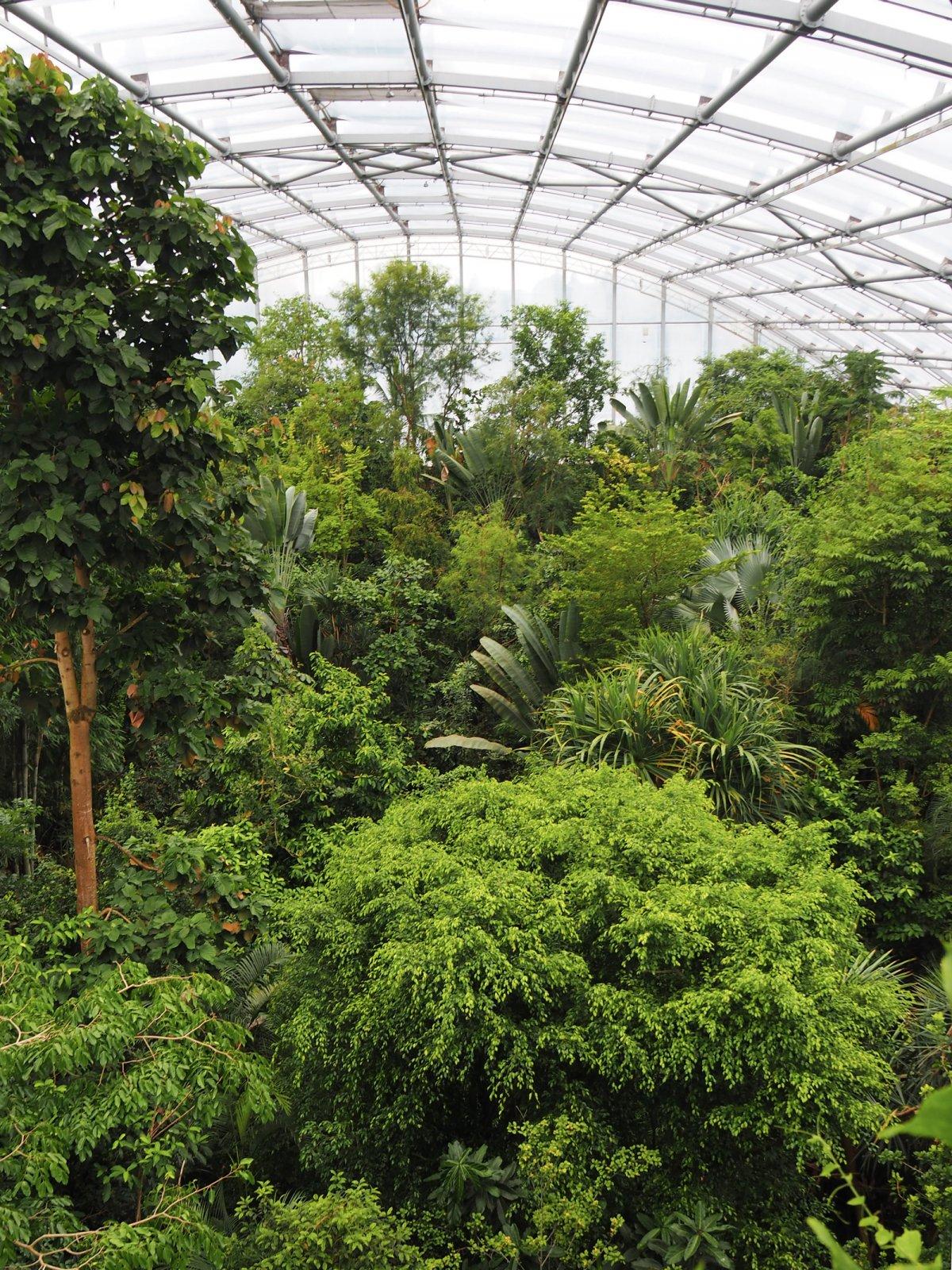 Winter in Zurich - Masoala Rainforest at Zoo Zurich
