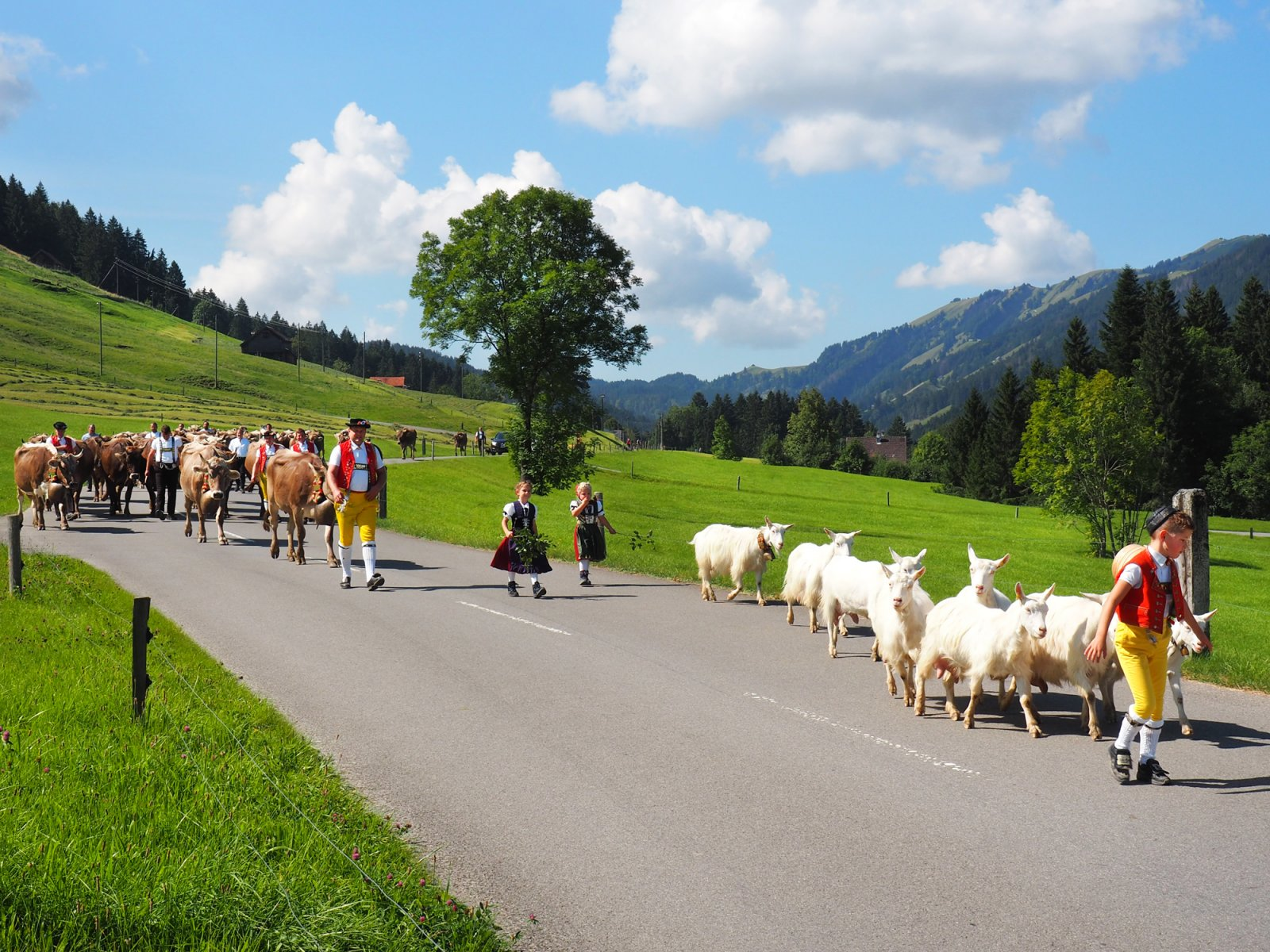 2021 guide to alpine cow parades in Switzerland - Appenzell