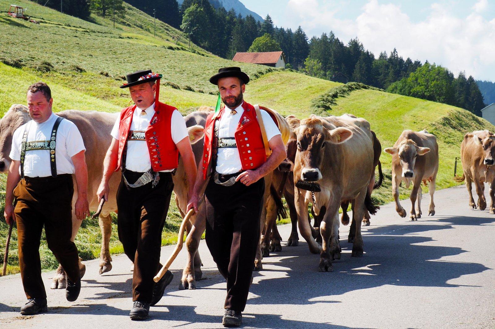 Appenzell Alpine Descent Alpabfahrt