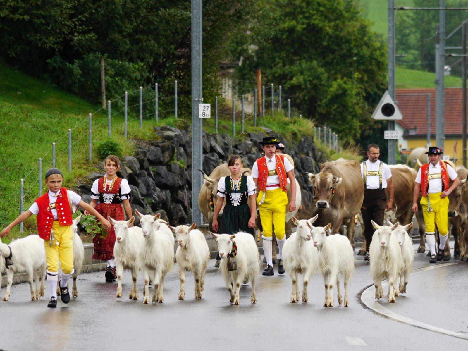 Cow Parades in Appenzell - Alpine Descent Alpabfahrt