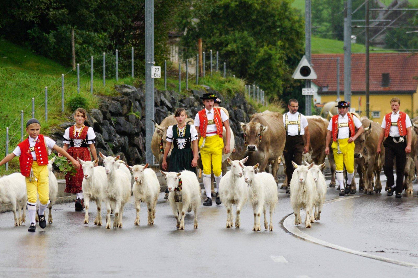 How alpine cow parades in Appenzell really work (Alpabfahrt)